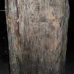 神城文化の森 輸入木材も綺麗です。その3
