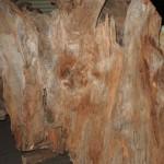 フォレスト神城文化の森ショールーム希の百貨店 屋久杉コーナー