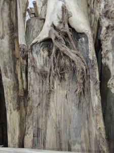 雷の落ちた木 ケヤキ(欅) 御神木