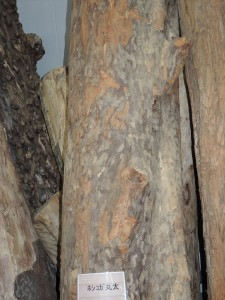 ホシコガ 御神木