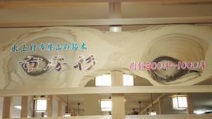 水上村市房山の銘木 森林セラピー基地 市房山・市房杉(1,000年)  樹齢800年~1000年 看板