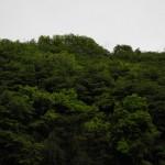 弊社、神城文化の森の社員の作業風景