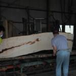 5月2日 宮崎県小林市柞木商店製材所にて製材