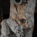 フォレスト神城文化の森 屋久杉記念館 銘木の天然乾燥材