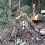 ケヤキ・アスナロで作られた鶴