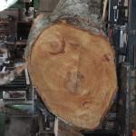 10月15日岐阜銘協 平成26年度全国優良銘木展示即売会で購入した原木を宮崎県小林市の柞木商店様で製材 その2