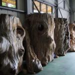 世界自然遺産登録地屋久島 屋久杉の原木 のご紹介です