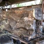 宮崎県綾町 高原工芸製材所様にてカヤ樹齢500年、ケヤキ樹齢200年の製材