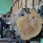 鹿児島県木材銘木市場協同組合 第1951回 鹿児島素材市で購入したクロマツの製材を宮崎県小林市の柞木商店様で行いました