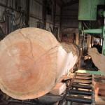 鹿児島県木材銘木市場協同組合 第1951回 鹿児島素材市で購入したクロマツの製材を宮崎県小林市の柞木商店様で行いました 2日目