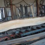 クロマツ、センダンの製材を1月12日に宮崎県小林市の柞木商店様で行いました。