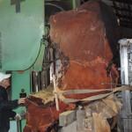鹿児島銘木市 第233回銘木入札会で購入した屋久杉の製材