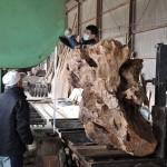 鹿児島銘木市 第233回銘木入札会で購入した屋久杉の製材 その3