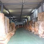 鹿児島銘木市場 第233回銘木市入札会にて購入した屋久杉の展示