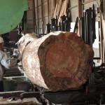 鹿児島木材市場より購入した木の製材 第1日目 クロマツの製材