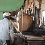 鹿児島木材市場より購入した木の製材 第3日目 センダン、ハゼの木、クロマツの製材