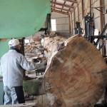 鹿児島木材市場より購入した木の製材 第4日目 クロマツの製材