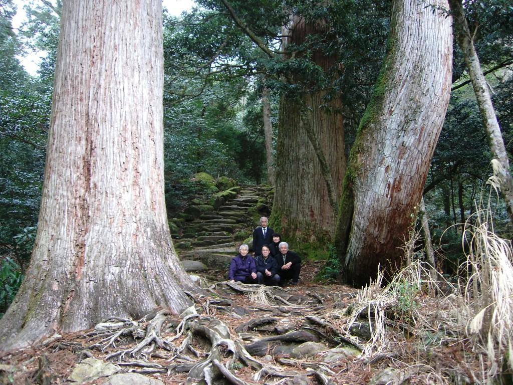 千年杉 森林セラピー基地・市房山市房杉を全国、世界に発信して行きます。