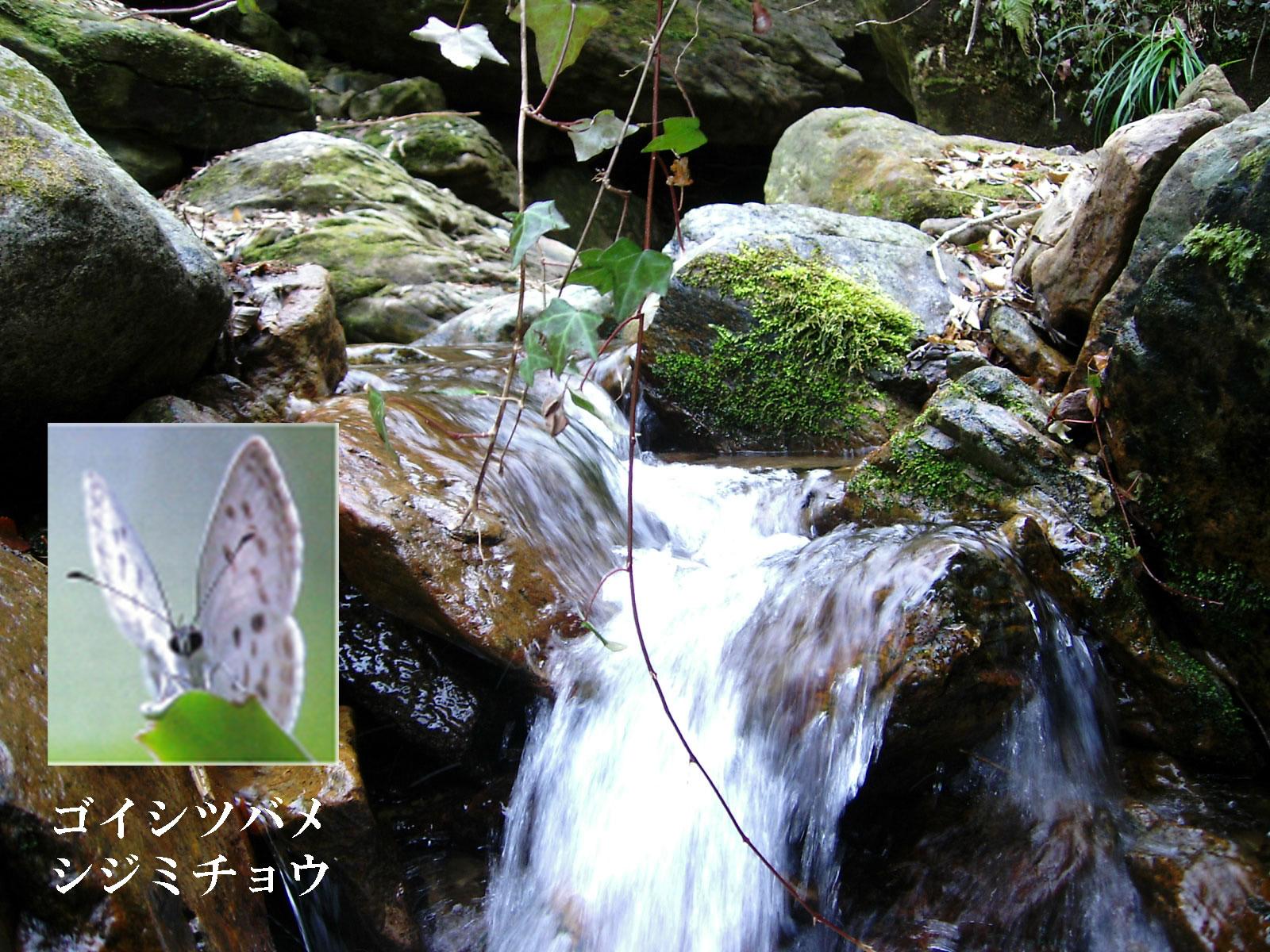 【日本】木の文化の振興
