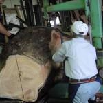 宮崎県小林市の柞木商店様にてケヤキ、クロマツ他の製材