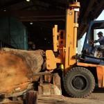 愛知県弥富市のヤトミ製材様にてサクラ、クワ、ツガの製材 宮崎県小林市の柞木商店様にてヒノキ、カエデの製材