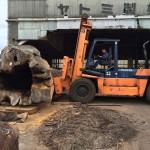 ヤトミ製材様にてケヤキ大木の製材