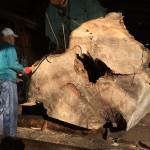 愛知県弥富市のヤトミ製材様製材 ブログ記載第6回目 ケヤキの製材