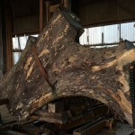 愛知県弥富市のヤトミ製材様製材 ブログ記載第7回目 アスナロの製材