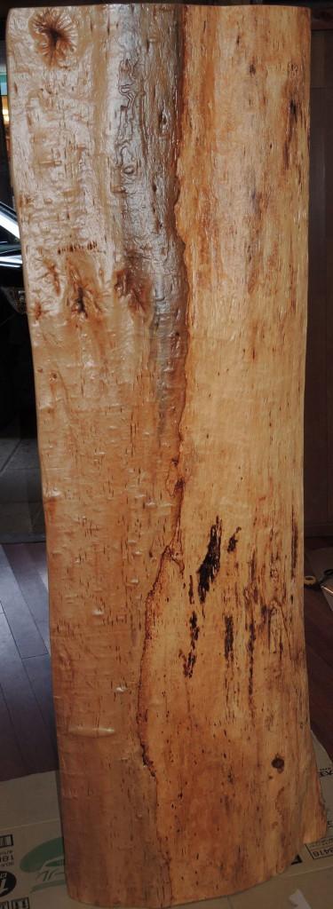A ヒメザクラ樹齢500年 (裏)