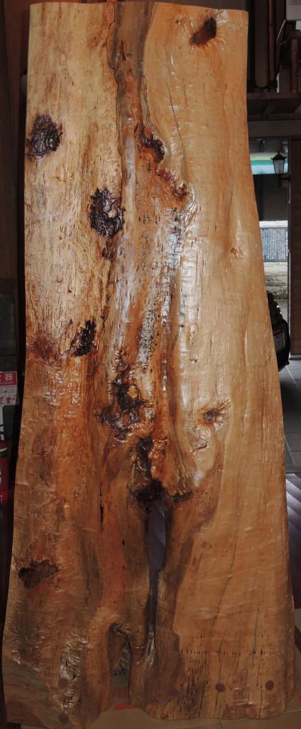 B ヒメザクラ樹齢500年 (裏)