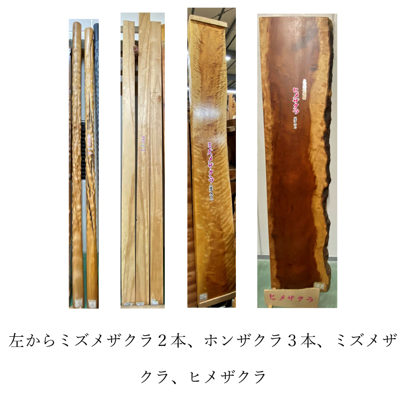 左から ミズメザクラ2本、ホンザクラ3本、ミズメザクラ、ヒメザクラ